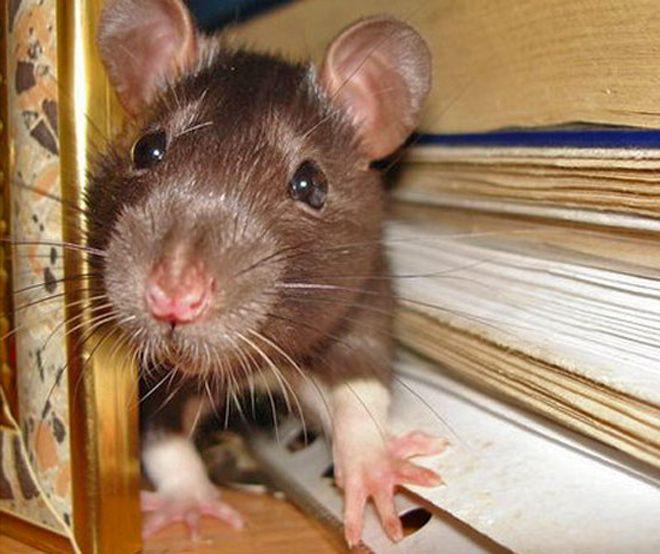 uteplitel-ne-gryzut-myshi-i-krysy